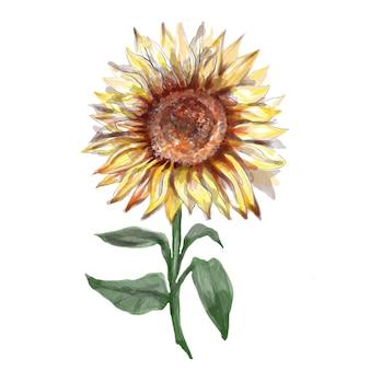 Zonnebloemen handgeschilderde aquarel illustratie