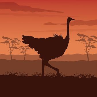 Zonsondergang afrikaanse landschap met silhouet struisvogel staande