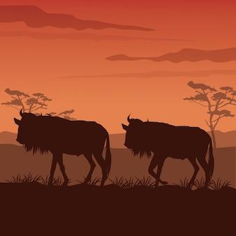 Zonsondergang afrikaanse landschap met silhouet wildebeest staande