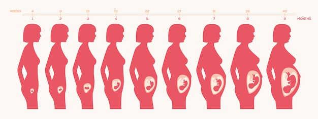 Zwangerschap procesontwerp