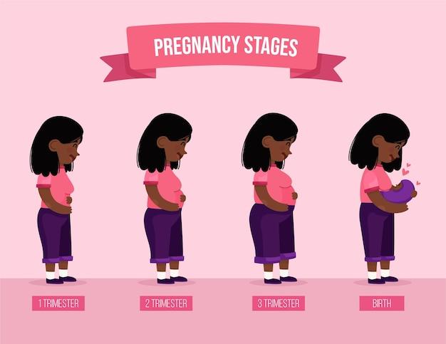 Zwangerschap stadia illustratie