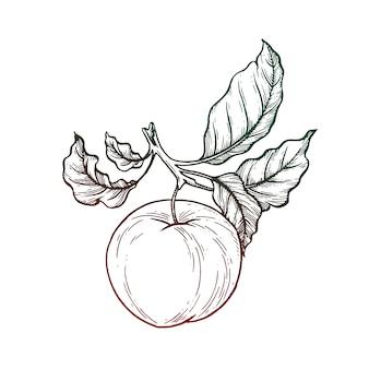 Zwart en wit apple illustratie