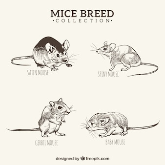 Zwart en wit handgetekende muizen fokken pack