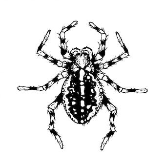 Zwart en wit spin.