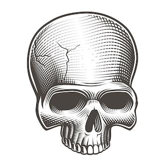 Zwart-wit schedel in gravure stijl op de witte