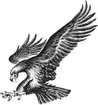 Zwart-witte adelaar