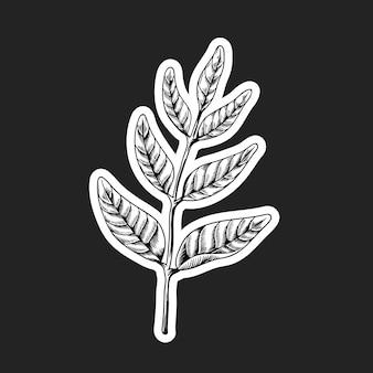 Zwart-witte bladsticker met een witte rand
