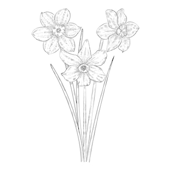 Zwart-witte narcissenbloemen.