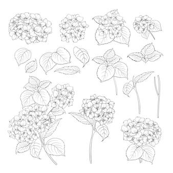 Zwarte contour van hortensia.
