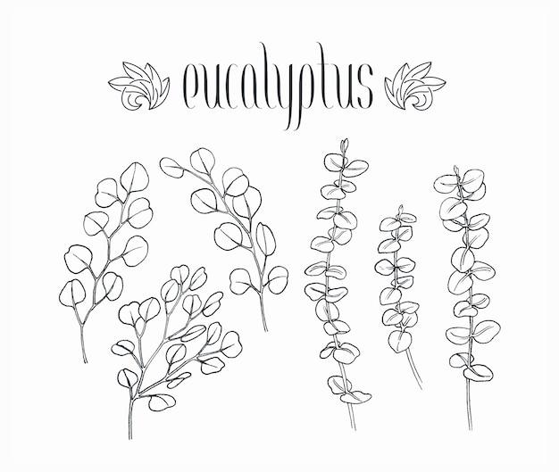 Zwarte geïsoleerde decoratieve zilveren dollar en babyblauwe eucalyptustakken, met de hand getekend door inktbladeren en planten.