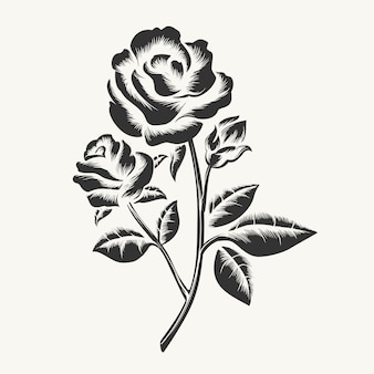 Zwarte hand getrokken rozen gravure