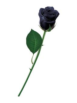 Zwarte roos illustratie