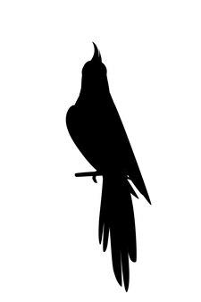 Zwarte silhouet schattige volwassen papegaai van normale grijze valkparkiet zittend op tak vectorillustratie