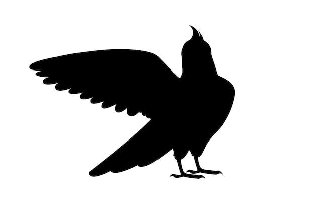 Zwarte silhouet volwassen papegaai van normale grijze valkparkiet die naar je kijkt en met zijn vleugel klappert