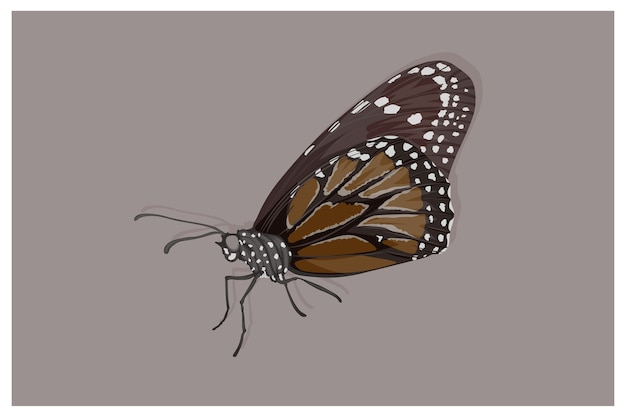 Zwarte vlinder met witte vlekkenillustratie