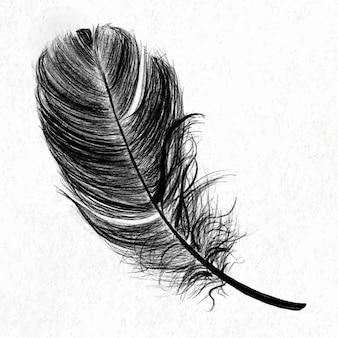 Zwarte vogel veer element vector