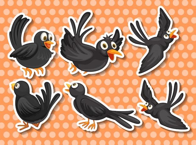 Zwarte vogel
