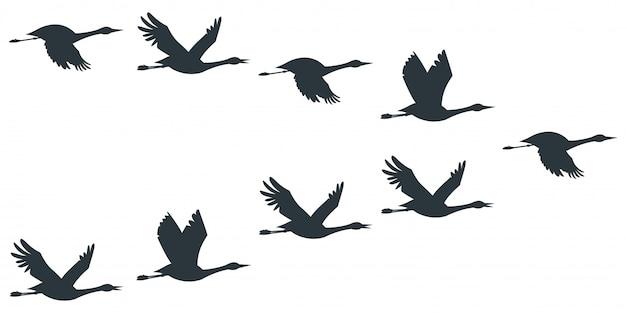 Zwerm kranen of ooievaar zwart silhouet in het vliegen.