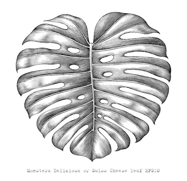 Zwitserse kaas blad hand tekenen vintage stijl zwart-wit illustraties geïsoleerd